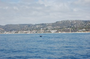 Whale watching with dana wharf sportfishing and whale for Dana point fishing charters